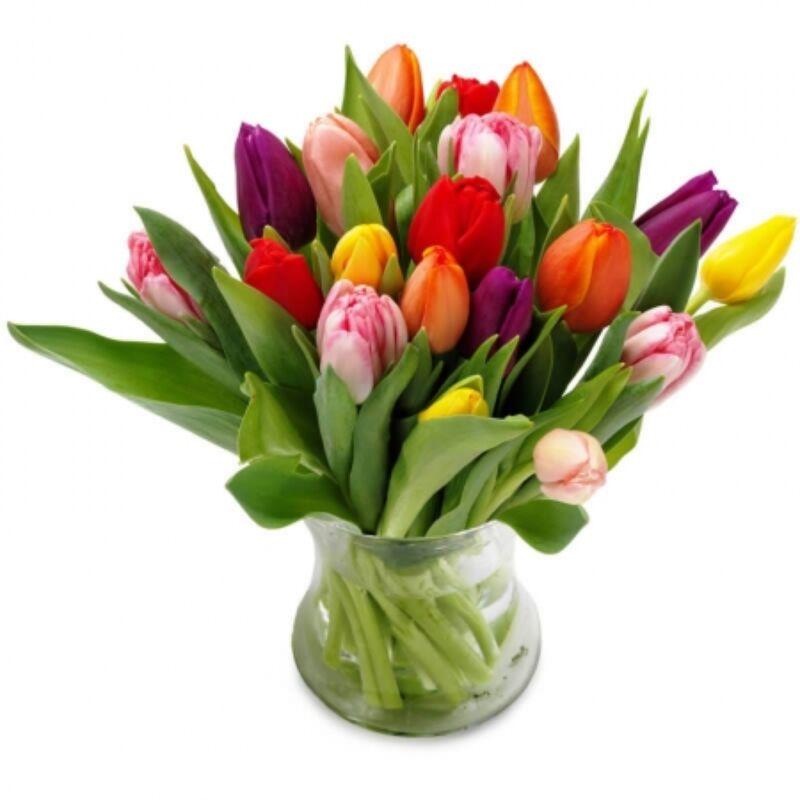 Színes tulipánok - 20db