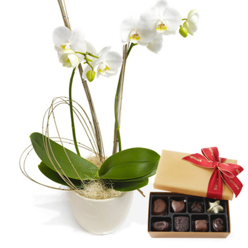 Fehér orchidea és csokoládé