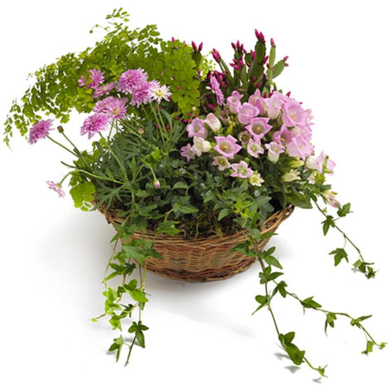 Cserepes virágküldés